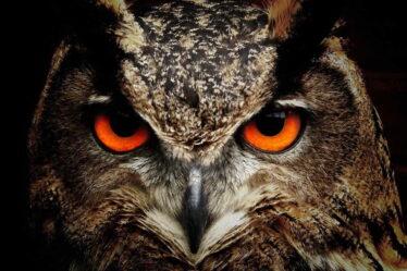 O tom, zda jste spíše ranní typ (skřivan) nebo večerní typ (sova), rozhoduje především genetika.